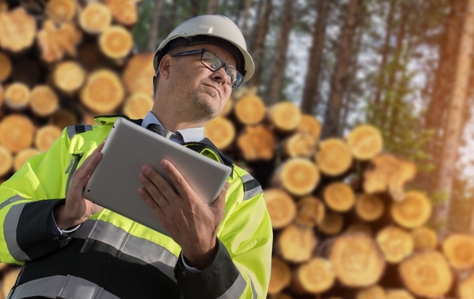 Forest Ecosystem Management